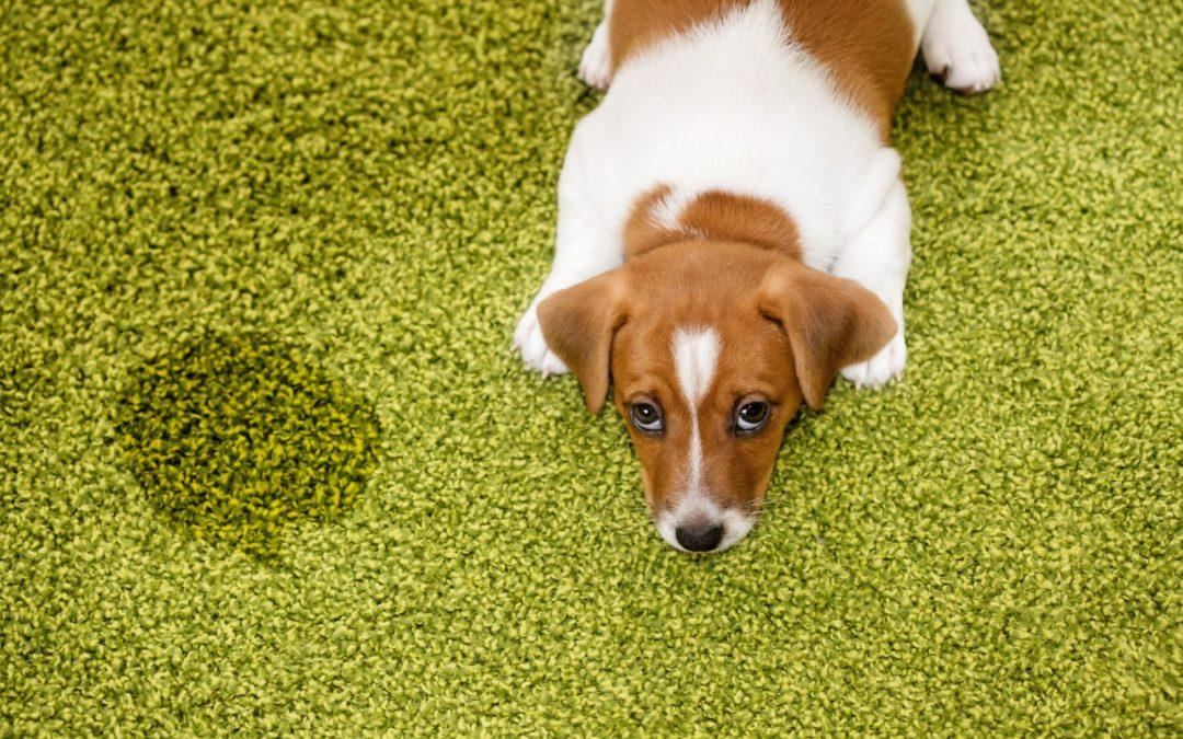 The Best Pet Carpet Cleaner